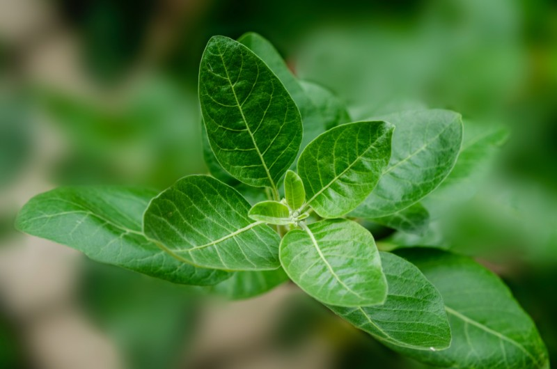 Natural supplements for grey hair india